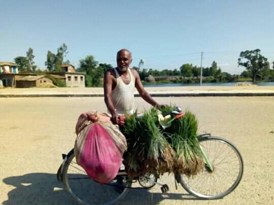 मधेशमा बाढीको कारणले धान बिउको हाहाकार,भारतीय बजारबाट किनेर ल्याउदै